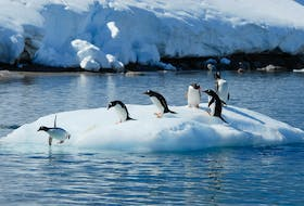 Gentoo penguins stand on an ice floe in Antarctica. Polar regions of Earth are warming much faster than anywhere else.