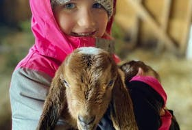 Penny Costelo, the daughter of Ryan and Shannon Costelo of Ingonish, owners of The Groovy Goat Farm and Soap Company, with a baby goat in their barn in Ingonish. The barn was lost in a devastating fire Wednesday morning, claiming the lives of the family's horses, goats, baby goats and chickens. CONTRIBUTED
