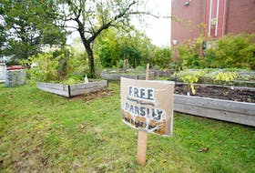 The community garden at the Bloomfield Centre, seen in Halifax on Wednesday Oct. 7.