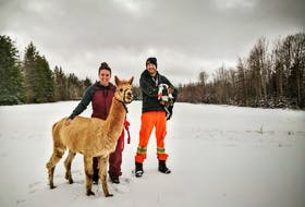 Vanessa Junkin and Will McKeiver took a leap of faith and landed in East Dalhousie, where they found the new beginning they longed for in farming. – Contributed