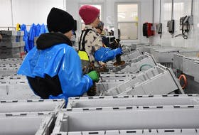 Workers at a lobster packing plant in Digby County, Nova Scotia.