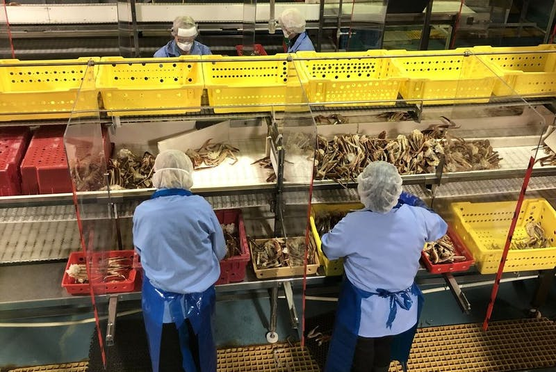 To prepare for the 2020 season, in the time of a global pandemic, fish processing companies throughout Atlantic Canada bought protective clothing and equipment for workers, and installed plexiglass on the assembly lines. - Contributed