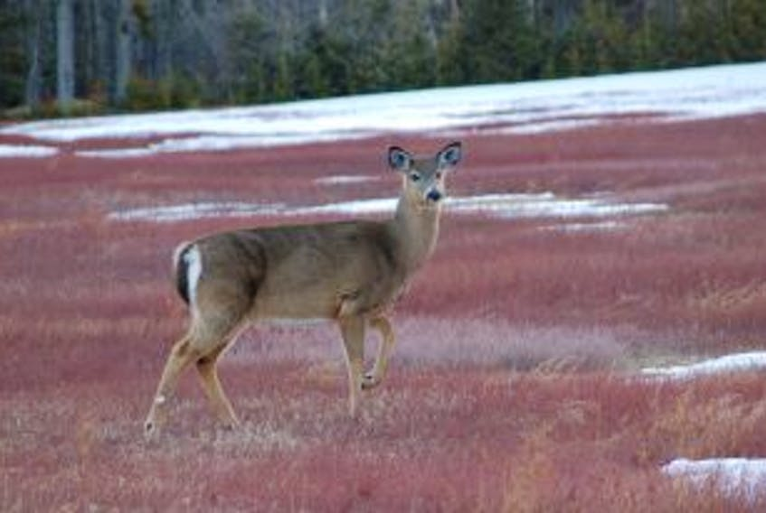 """[""""Recent data released by Nova Scotia's department of natural resources suggests dogs are not the threat to deer that they once were.""""]"""