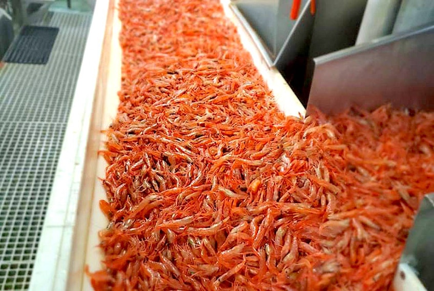 According to the latest science data from Fisheries and Oceans, northern shrimp stocks haven't changed much since the last assessment.