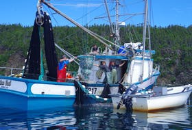 The capelin fishery in Newfoundland and Labrador is a small-boat, inshore fishery. In 2020 the quota was about 24,000 metric tonnes but fishers landed just over 16,000 tonnes.