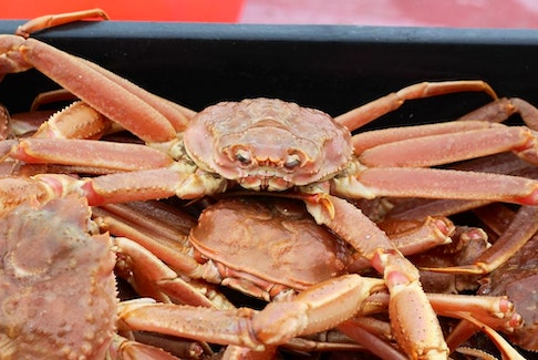 A snow crab from a catch. CONTRIBUTED