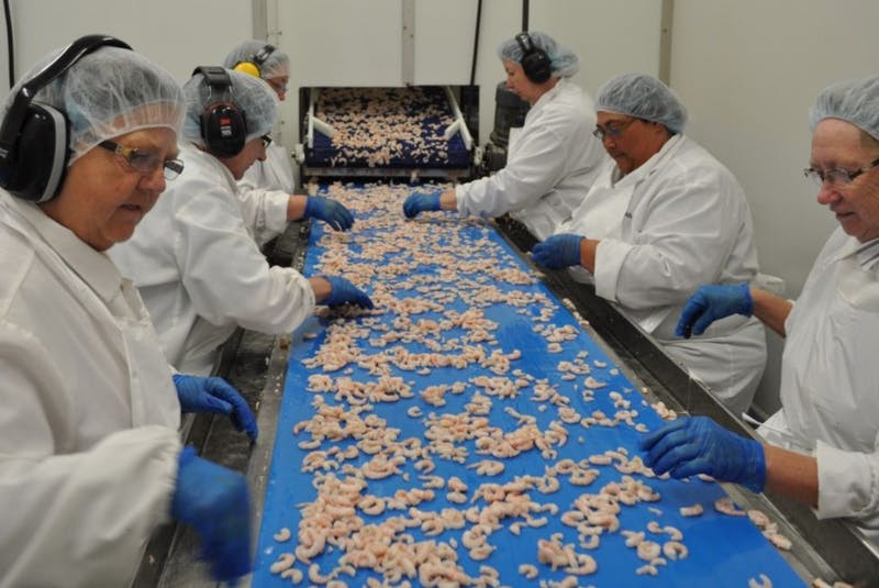 Workers on a seafood processing assembly line in Newfoundland and Labrador. — File photo