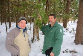 Mark Whitmore, left, a forest entomologist with Cornell University, joined Andrew Williams, Truro's urban forestry coordinator, in Victoria Park to talk about dealing with the hemlock woolly adelgid. The insects have destroyed large numbers of hemlock trees in some places. LYNN CURWIN/TRURO NEWS