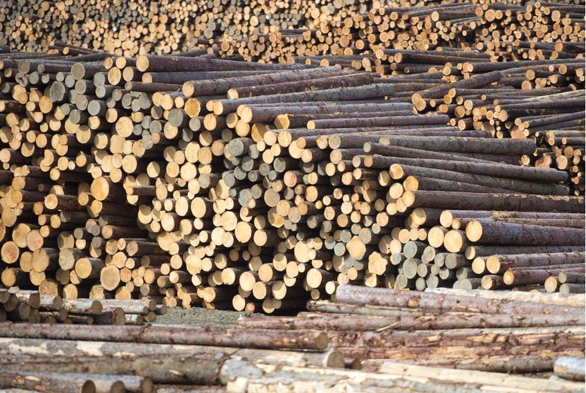 The B.C. government is deferring stumpage fees to help the struggling forest industry navigate the financial fallout from the pandemic.