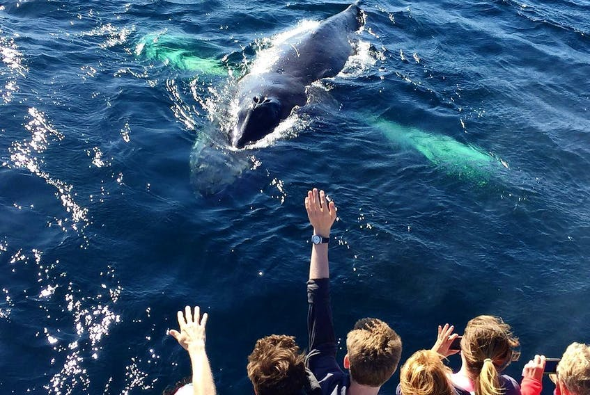 There will be less crowding compared to previous years when boat tour operators start their season later this year. — O'BRIEN'S WHALE AND BIRD TOURS FACEBOOK PHOTO
