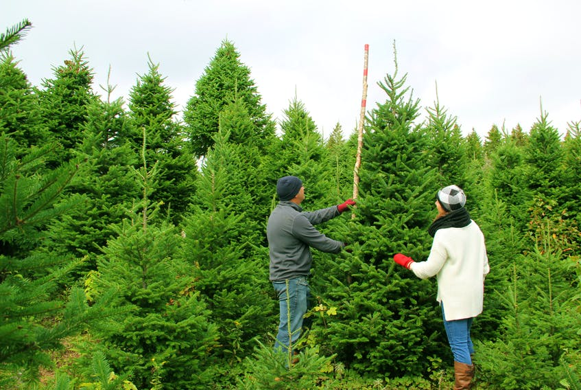 David and Jenna Lee Mombourquette are the owners and operators of Green Hills Farm in Albert Bridge, Cape Breton. They offer some hacks to make sure your tree stays fresh throughout the holidays.