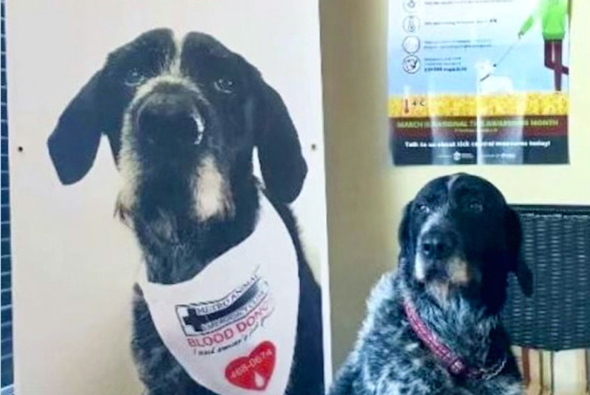 The Nova Scotia Metro Animal Emergency Clinic's blood donor program has saved countless lives. Contributed