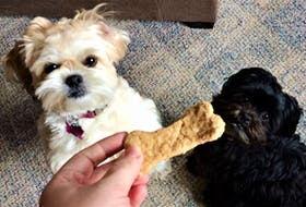 Trixie, left, and Pippa eye a homemade peanut butter bone.