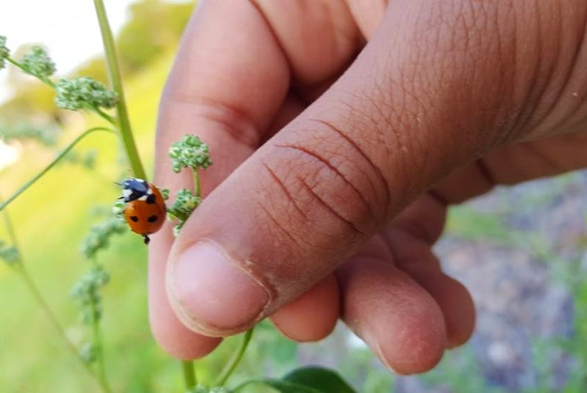 There is not one condition that solely attracts bugs to gardens.
