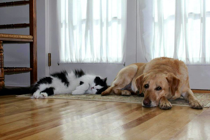 Pictured are columnist Tracy Jessiman's pets Rudy and Harley. Harley was a rescue dog who had to wear a muzzle near the end of his life. He was not aggressive just unpredictable. CONTRIBUTED