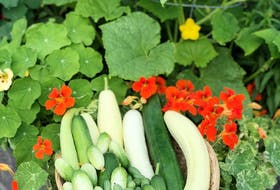 Green up your thumb with gardening podcasts like The Food Garden Life show or A Way to Garden. NIKI JABBOUR