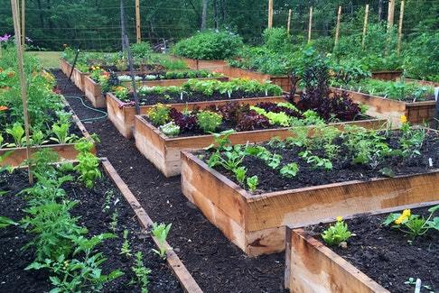 Raised beds are a popular way to grow food and flowers and spring is a great time to build a new bed for the coming season. Niki Jabbour