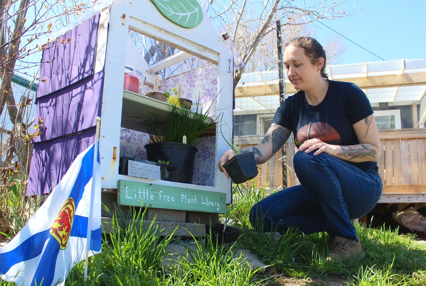 Katie Boutilier looks at onion plants that were dropped off at her Little Free Plant Library on Fulton Avenue in Westmount on Sunday. The tiny greenhouse at the end of her driveway is more popular than ever as more people set out to grow their own food this year. Chris Connors/Cape Breton Post