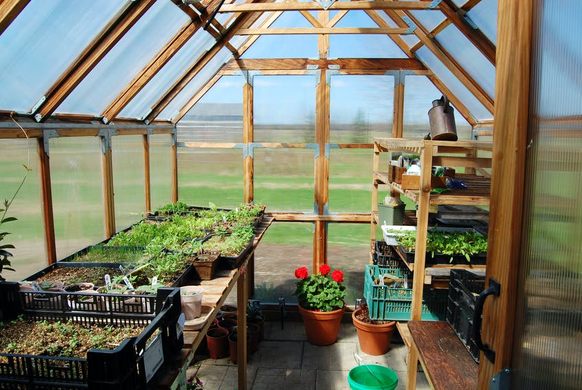 A greenhouse, like Mark Cullen's, can be a great place to relax or indulge a gardening passion, as well as a sanctuary for snowbirds who can't head to warmer areas this winter because of the pandemic.