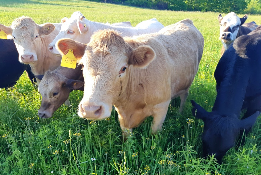 Domestic animals, like cows and pigs, eat plants, which grow in soil.