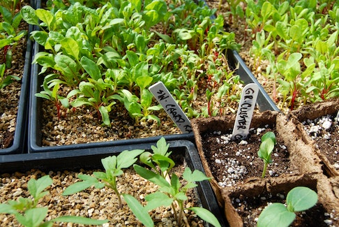 Make the garden a greener, healthier place by following a few simple tips.
