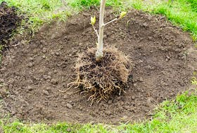 The fall season is a great time of year to plant a deciduous tree. Contributed