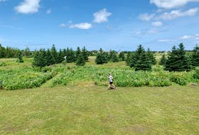 Vera Teschow's partner runs around the P.E.I. property 30 to 40 times a day to stay active while in self-isolation. Vera Teschow/Special to The Guardian