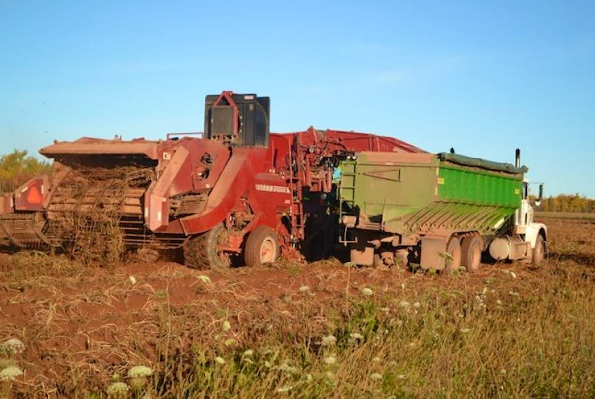<p>Potato harvesting equipment was finishing up a field along the Botts Road in Bloomfield Thursday morning. With close to 85 per cent of the Island's potato crop already harvested, there's no panic in the industry this fall, not even with a wet weekend forecast.&nbsp;</p>