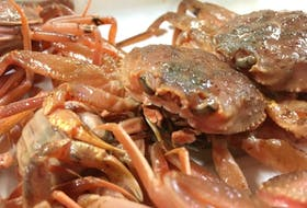 Snow crab. Department of Fisheries and Oceans photo.
