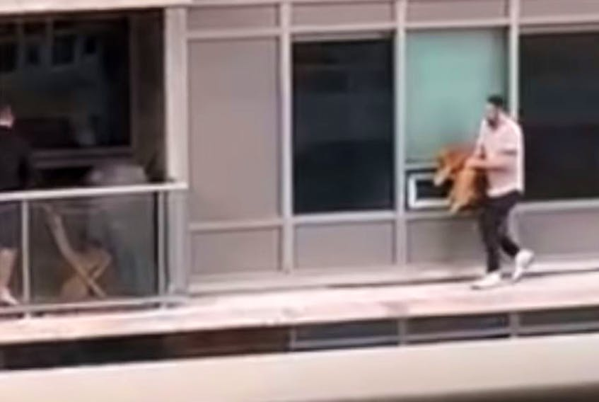 A resident of a Liberty Village condo unit defies risk and injury to scoop his cat from a neighbours balcony