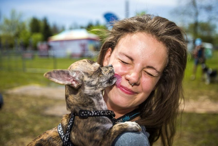 Stephanie Durante holds her chihuahua Quincy, at the 16th annual Woofstock held at Woodbine Park in Toronto, Ont. on Sunday May 26, 2019.