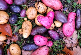 Plant a variety of potatoes to ensure a healthy crop.