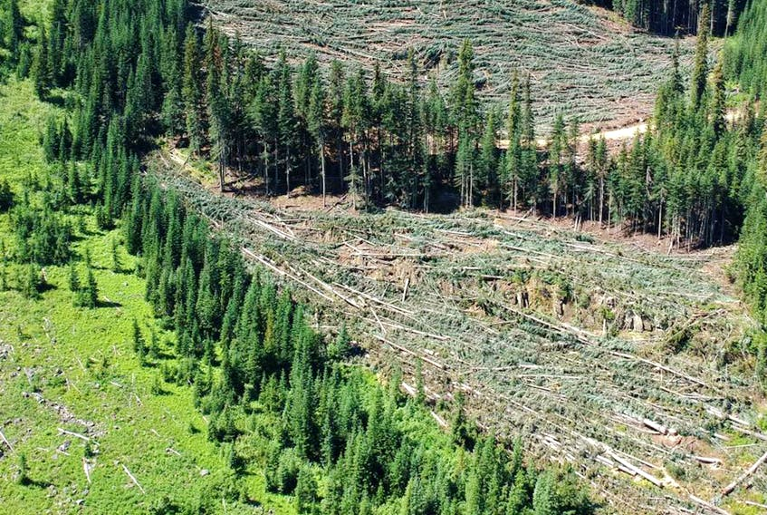 Environmental groups want the B.C. government to deny an Imperial Metals application to explore an area near Manning Park, which was logged last year.