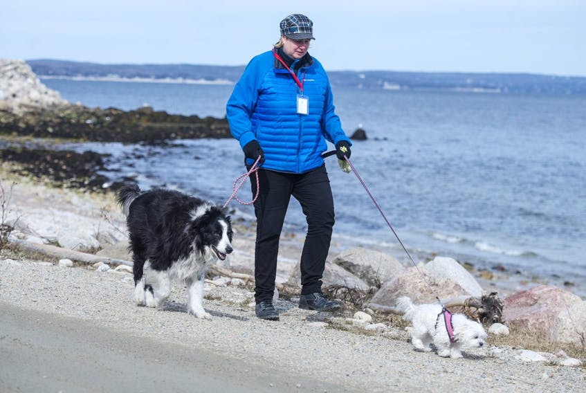 Trish MacCormack, a volunteer with ElderDog Canada, takes Maxx and Lily out for a walk in Mill Cove on Monday, March 23, 2020. - Ryan Taplin