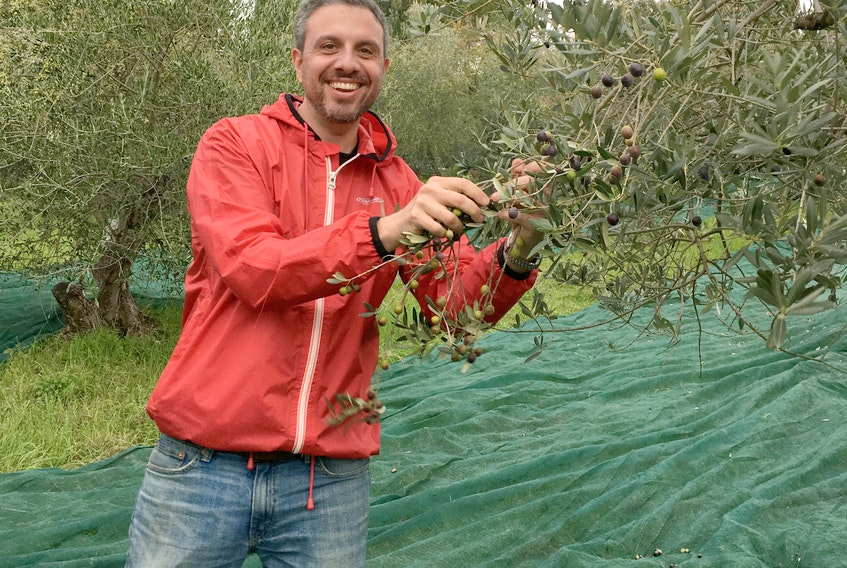 Fil Bucchino, shown during the olive harvest in Italy, brings his documentary Obsessed with Olive Oil to the Devour! Food Film Fest in Wolfville this week.