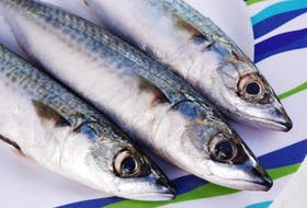 <p>The commercial mackerel fishery (both inshore and offshore) was closed early this year because the quota was reached for the first time. Researchers are reaching out to fishermen through a survey to gather information for stock management.</p>
