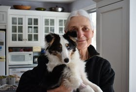 Terry D. Stevenson holds Jesse, her five-month-old Shetland puppy, in her Charlottetown home on Jan. 8. Jesse gave Stevenson a scare earlier this month after ingesting marijuana while walking on the Confederation Trail. The puppy had to be taken to the Atlantic Veterinary College for an emergency procedure to induce vomiting.