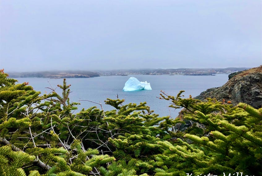 On a recent trip to Twillingate Newfoundland, Krista Miller saw quite a few magnificent icebergs and as many curious tourists! They came from France, Finland, Switzerland and Ottawa to check out the icebergs. She said it was nice to chat with the visitors as they made their way around the hiking trails.