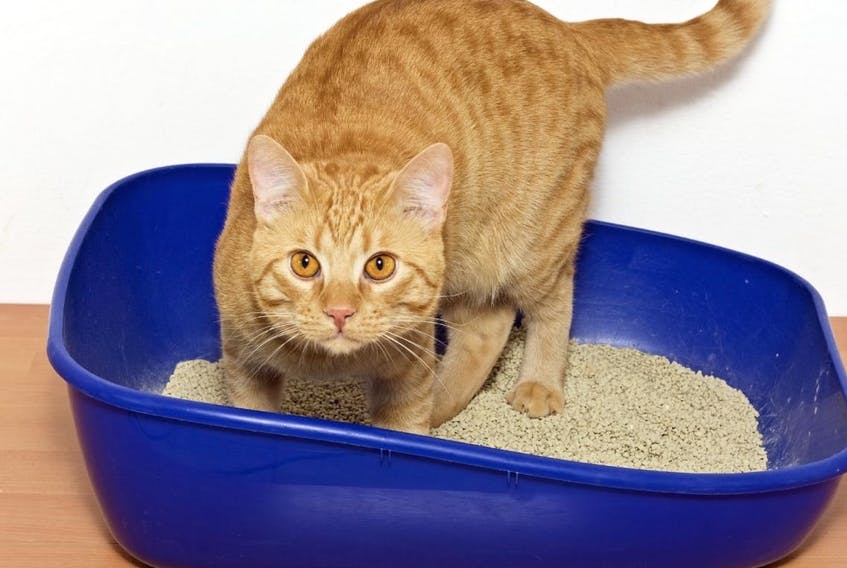 Valley Waste Resource Management is now encouraging cat owners to dispose of used kitty litter in the green compost bin.