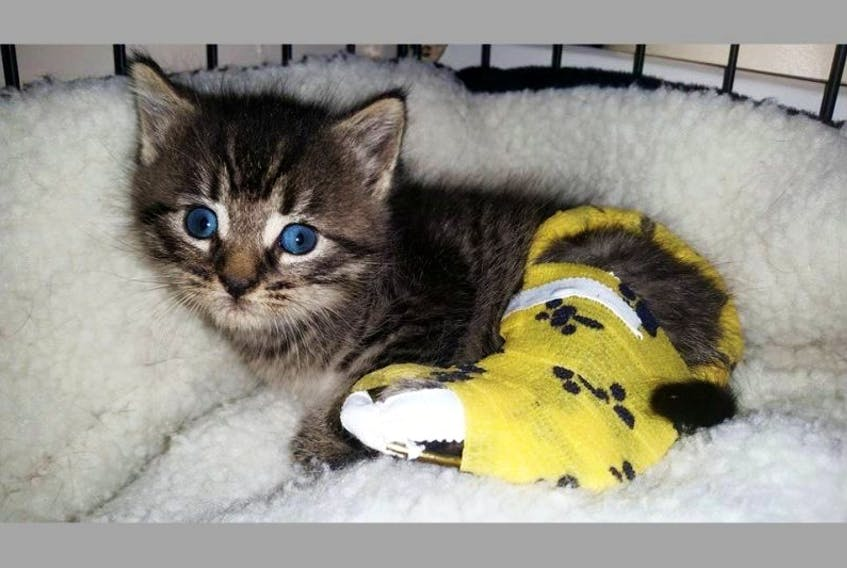 An injured four-week-old kitten was discovered in the rubble of a demolished church on Thanksgiving Monday.