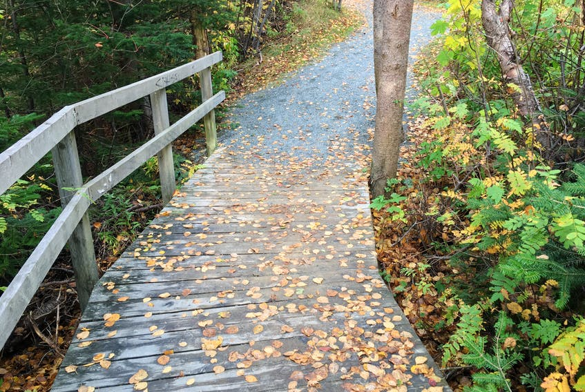 Along the Virginia River trail in St. John's. — Contributed photo