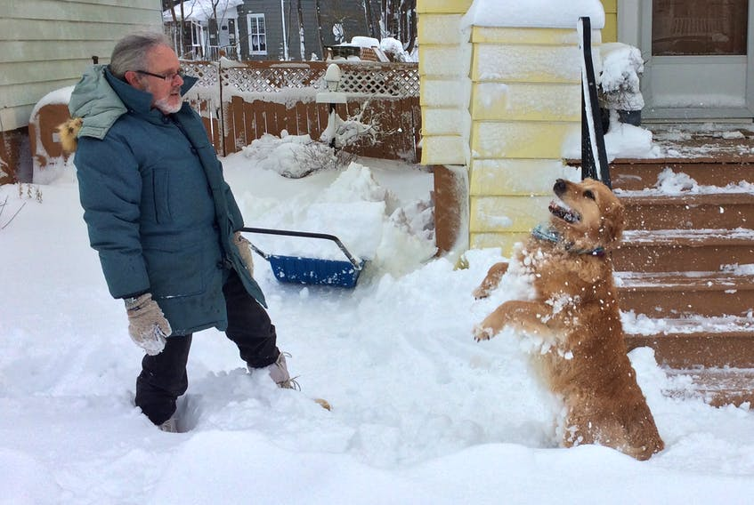 Bailey the retriever was very content Monday to have his owner Sydney resident John Duffy toss a few snowballs after an overnight snowstorm left island residents digging out Monday. CAPE BRETON POST
