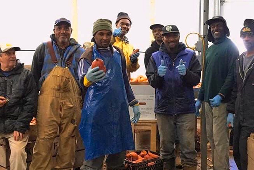 Migrant workers show off the fruits of their labour last fall at a packing shed on Keddy Farms outside Coldbrook. The workers helped to harvest 1.7 million pounds of sweet potatoes.