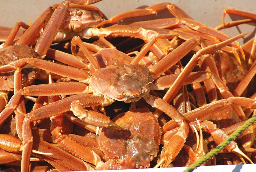 Snow Crab is the most valuable catch for fish harvesters in Newfoundland and Labrador.