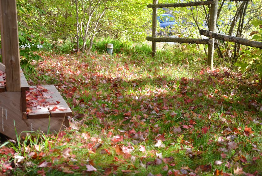 Fallen leaves accumulate in a suburban yard. The Nature Conservancy of Canada advises leaving them where they lie.