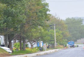 Tree-lined Mount Cashel Road runs between New Cove Road and Torbay Road in St. John's. BARB SWEET/THE TELEGRAM