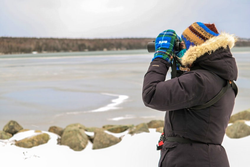Monique Vassallo looks through her binoculars at some Iceland gull across the bayside in River Ryan, at the sixth annual Harbour Hop in New Waterford on Sunday. JESSICA SMITH • CAPE BRETON POST