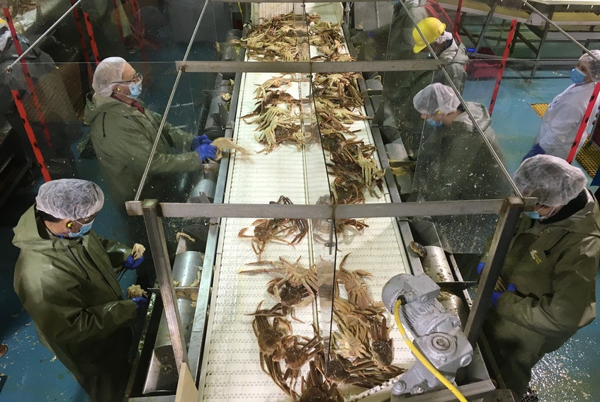 Workers on the crab butchering at the Ocean Choice International (OCI) plant in Triton wore personal protective equipment (PPE) and were separated by plexiglass dividers to work in the time of COVID. OCI is one of the original members of the Association of Seafood Producers (ASP), which now includes 25 processing companies following a merger of the ASP and SPONL. CONTRIBUTED PHOTO