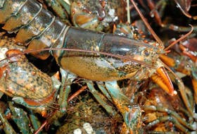 Live lobsters from Atlantic Canada are shipped all over the world. While most of them end up in the United States and Canada, some end up on dinner plates in Dubai, in the United Arab Emirates.
