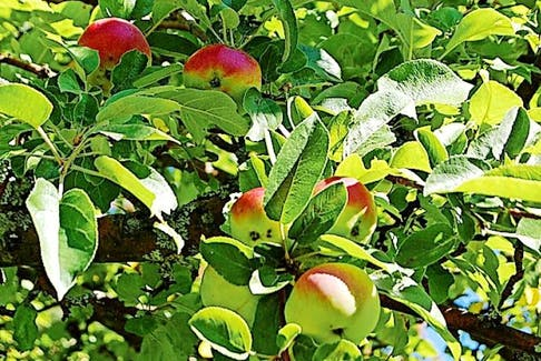 Some years are better than others when it comes to relying on Mother Nature to grow apples.
